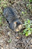 Cute tabby cat on the ground stock photos