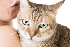 Cute tabby cat in the hands of a woman Stock Images