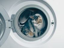 Cute tabby cat hiding in the washing machine. Tabby cat hiding in a openwashing machine and looking sideways stock photography