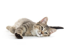 Cute tabby cat Royalty Free Stock Photos