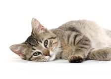 Cute tabby cat Stock Images