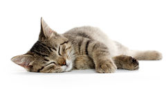 Cute tabby cat. Laying down and resting on white background royalty free stock images