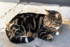 Cute tabby cat Stock Images