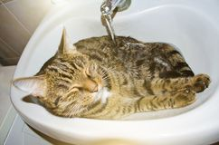 Cute tabby cat lies in the washbasin in the bathroom. royalty free stock photography