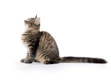 Cute tabby cat Royalty Free Stock Photos