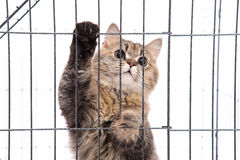 Cute tabby cat looking Stock Images