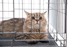 Cute tabby cat looking Royalty Free Stock Photography