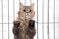 Cute tabby cat looking Royalty Free Stock Image