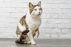 Cute tabby cat looking curious sideways and lift her paw. stock photos