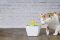 Cute tabby cat looking curious to a pet drinking fountain. Horizontal image with copy space stock photo