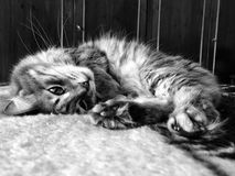 A cute tabby cat lying on bed Stock Image