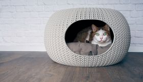 Cute tabby cat lying in a cat cave. Cute tabby cat lying in a cat cave and looking curious to the camera royalty free stock photography