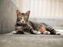 Cute tabby cat lying on the floor Stock Photos