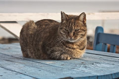 Cute tabby cat lying on a wooden table Stock Photos