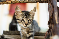 Cute Tabby Cat on Old Wooden Pallet. Little Cat on Abandoned Old Rusty Ship Royalty Free Stock Images