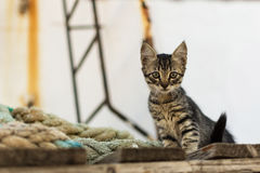 Cute Tabby Cat on Old Wooden Pallet and Worn Navy Ropes. Little Cat on Abandoned Old Rusty Ship Royalty Free Stock Image