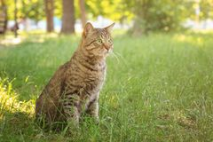 Cute tabby cat. In park stock photo