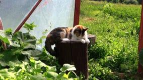 Cute tabby cat pet wash itself on wooden stump on sunlight stock video