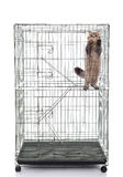 Cute tabby cat playing in a cage Stock Images