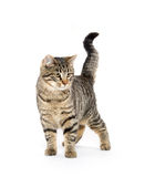 Cute tabby cat playing Stock Images