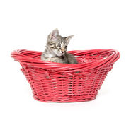 Cute tabby cat in red basket Royalty Free Stock Photography