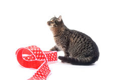 Cute tabby cat and red ribbon Stock Photo