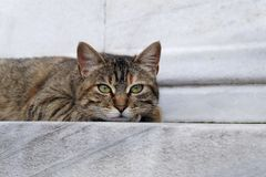 Cute Tabby Cat is Resting on Marble Floor Stock Photos