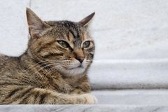 Cute Tabby Cat is Resting on Marble Floor Royalty Free Stock Image