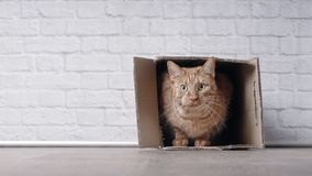 Cute ginger cat sit in a cardboard box and look curious to the camera. Cute tabby cat sit in a cardboard box and look curious to the camera Stock Image