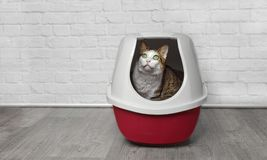 Cute tabby cat sit in a red litter box and look up.  stock photos