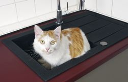 Cute tabby cat sitting in the kitchen sink and looking curious up to the camera. royalty free stock images