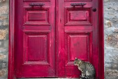 Cute Tabby Cat is Sitting Beside Red Wooden House Door stock photo