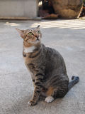 Cute tabby cat sitting and staring to something Stock Photography