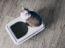Cute tabby cat sitting on a top-entry litter box and looking up to the camera. royalty free stock photos