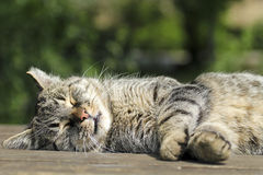 Cute tabby cat sleeping on the table Stock Photo