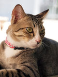 Cute tabby cat staring to something Stock Photography