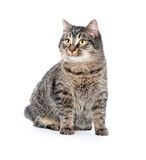 Cute tabby cat on white background Stock Images
