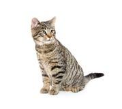 Cute tabby cat on white Stock Photos