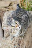 Cute tabby cat on wood log stock image