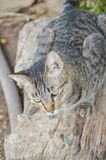 Cute tabby cat on wood log stock images