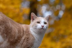 Cute tabby cat with yellow background stock photos