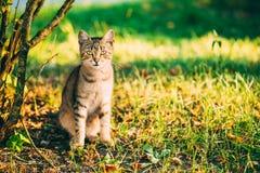 Cute Tabby Gray Cat Kitten Pussycat Stock Photo
