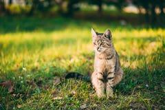 Cute Tabby Gray Cat Kitten Pussycat Royalty Free Stock Images