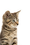 Cute tabby kiten Royalty Free Stock Photos