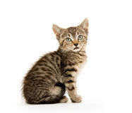 Cute tabby kiten Stock Photos