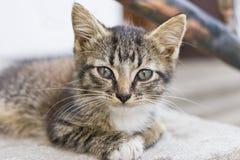 Cute Tabby Kitten. Close up Portrait of Cute Tabby Kitten Royalty Free Stock Image