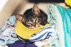 Cute tabby kitten asleep in the laundry Stock Photography
