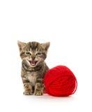 Cute tabby kitten Stock Image