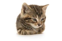Cute tabby kitten Stock Photos