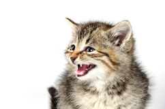 Cute tabby kitten Stock Photos